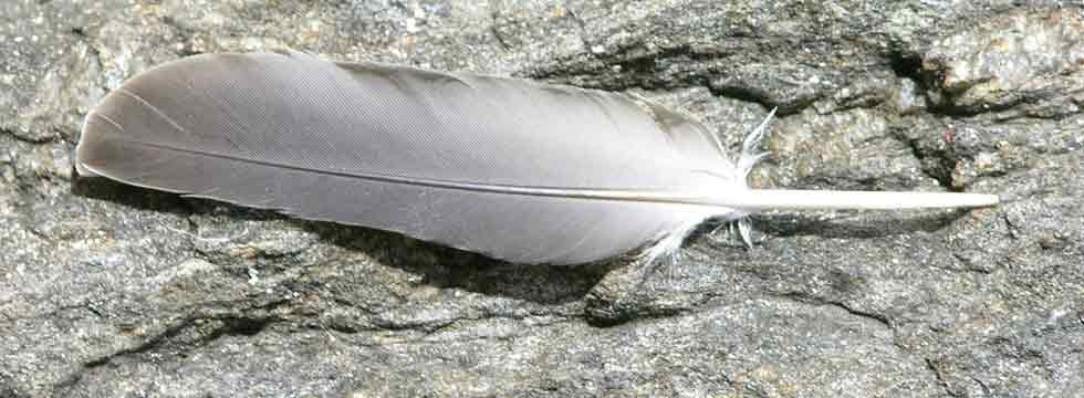 Photo of gray feather resting on granite